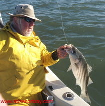 Striped bass, charter,